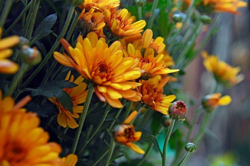 numeros y flores