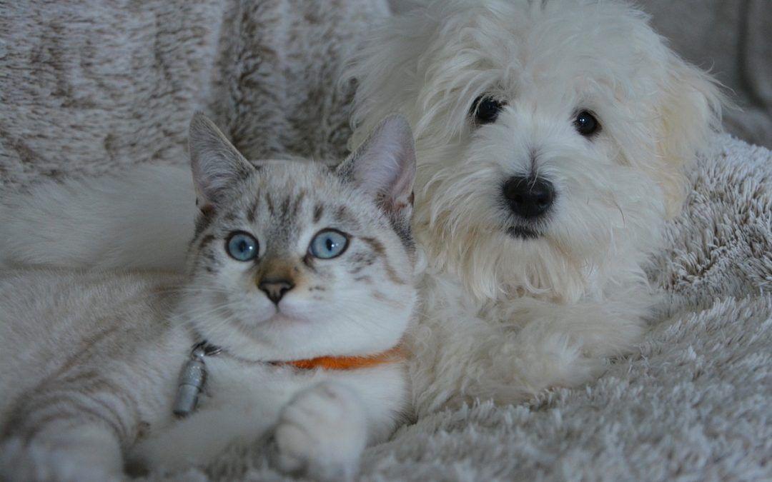 Numerología de las Mascotas